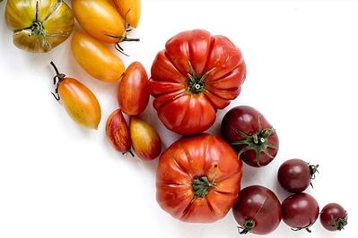 A selection of tomatoes