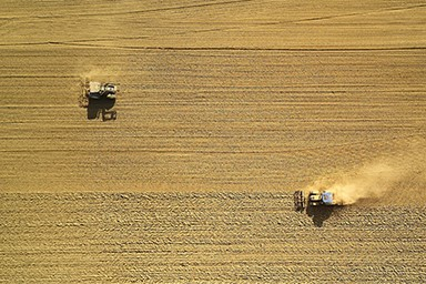 Tractors harvesting a field of wheat