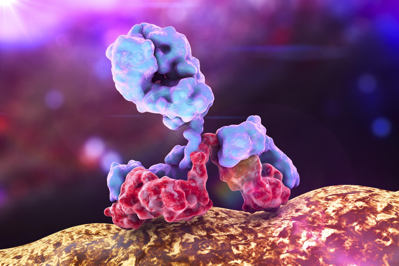 RMS Antibody attacking bacteria.jpg